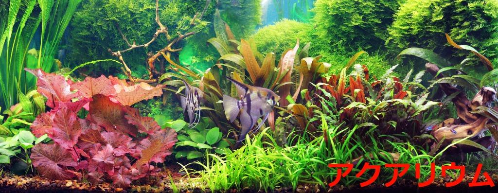 南国の熱帯魚